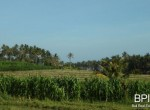 4-plots-of-land-for-sale-in-west-bali-2