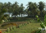 4-plots-of-land-for-sale-in-west-bali-3