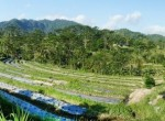 valley-resort-for-sale-surrounded-by-rice-fields-05