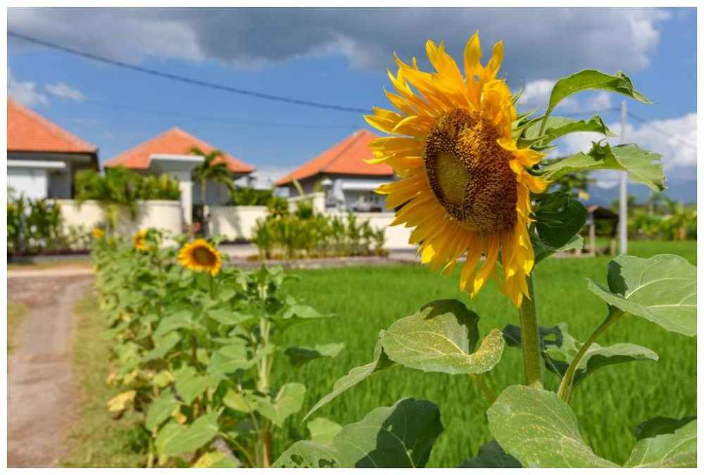 Banyu Riris Rental Sunflower Close By