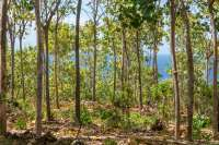Land For Sale In Pacung