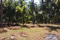 Beachfront Land In Lombok For Sale